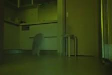 Katzenspiele bei Nacht
