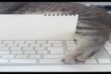 So hältst du deine Katze von der Tastatur fern