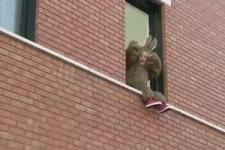 So ein Känguru kann hoch springen