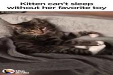Nie schlafen ohne Kuscheltier