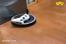 Kleine Katze fährt mit dem Saugroboter spazieren