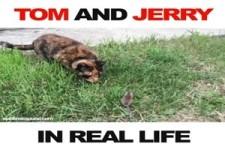 Tom und Jerry im realen Leben