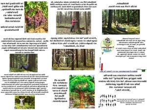 Waldbaden die Kraft aus dem Moos