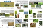 ungewöhnliche-Tiere---Libellen.pps auf www.funpot.net