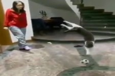 Katze fängt Ball ab
