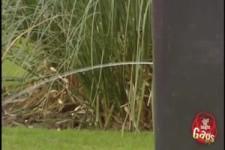Vorsicht Kamera der Wildbiesler