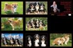 Hunde-38.ppsx auf www.funpot.net