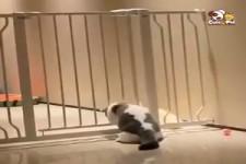 Sportliche Haustiere