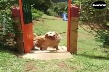 Der Hund und sein Stock