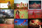 Poppies---Mohnblumen.ppsx auf www.funpot.net
