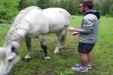 Pferdetritt