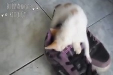 Katzen schlafen wo sie gehen und stehen