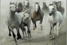 Roccos Pferde - Show vom 9.6.2020