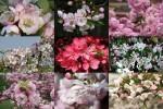 Flori-de-mar---Apfelblüten.ppsx auf www.funpot.net