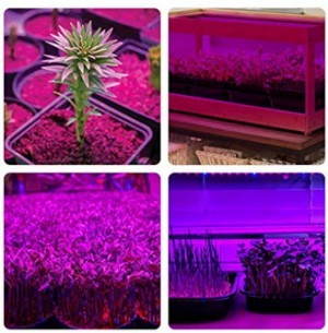 LED Pflanzenlicht!