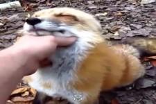 Diese Tiere lieben Umarmungen