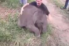 so lustig - kleine Elefanten in Spiellaune