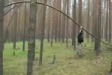 Baumhüpfer