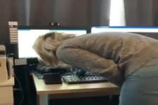 Katze schläft am PC