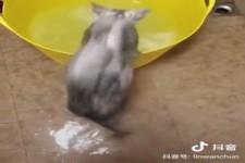 Katze badet gerne
