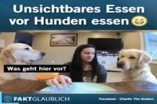 Unsichtbares Essen vor Hunden essen