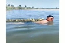 Mit Enten schwimmen