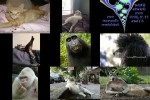 Tiere.pps auf www.funpot.net