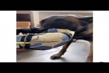 Hunde-Spiel