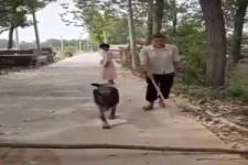 Hilfsbereiter Hund