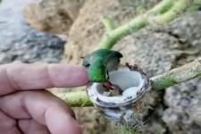 Vogel-Nachwuchs wird gefüttert