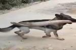 Klasse-wie-der-Hund-reagiert.mp4 auf www.funpot.net