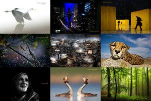 finalists from siena internationalphotography awards