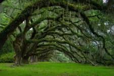 Sind das Bäume oder was