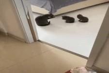 Jetzt ist Putz-Unterricht bei den Kätzchen