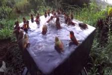 Kolibri-Pool-Party