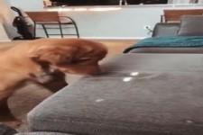 Lustiges Spiel mit dem Hund