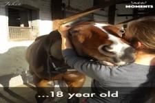 Mit Pferden aufgewachsen