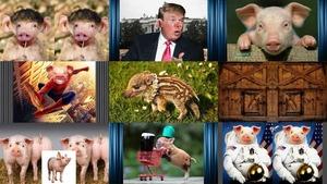 Schweinische Bilder
