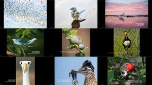 The 2020 Audubon Photography Awards Winners Top 50