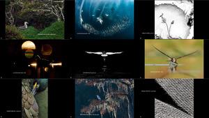 Bird Photographer of the Year 2020 Winners 1