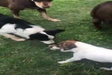 Mutige Hunde
