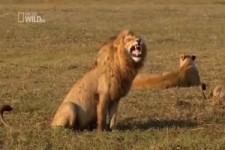 wenn Tiere sprechen könnten