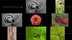Amazing Macro Winners of the International Garden Photograph