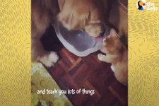 Dogs Loved His Kitten Since The Moment They Met -