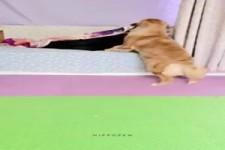 Tolle Hilfe dieser Hund