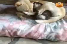 Tiere geben so viel Liebe und Wärme