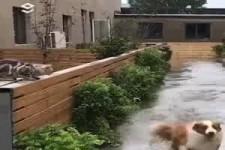 Ist der Hund übers Wasser gelaufen?