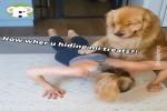 Hund-überwacht-das-Training.mp4 auf www.funpot.net