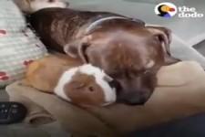 Kuriose Tier- Freundschaften