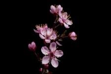 Flowers Opening Timelapse - Blumen öffnen Zeitraffer